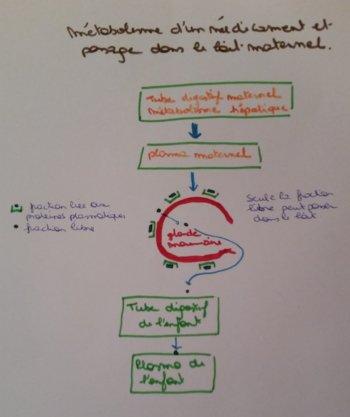 schéma de la métabolisation d'un médicament